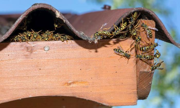 come allontanare le vespe dal tetto